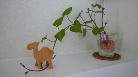 ちょっとした観葉植物