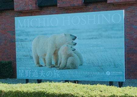 アラスカの大自然で生きるホッキョクグマ