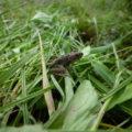 足音に驚いて逃げ出すカエルにあちこちで遭遇。