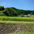 邪魔にならないところに車を停めて、棚田沿いの道を歩きます。