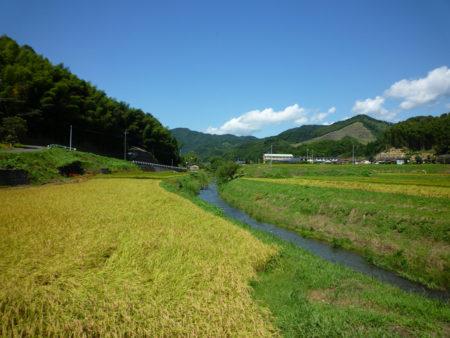 聞こえてくるのは、川の音。虫の声。静けさの中、わさわさっと田んぼからサギが飛び立ってびっくり。