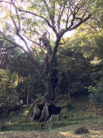 3000年以上前からここに鎮座し、自然の移り変わりや人々の営みを見守り続けてきたんですね。