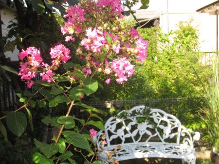 ほったらかし気味のうちの野暮ガーデン