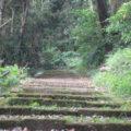 鎮守の森の神社の階段を駆け登ります。