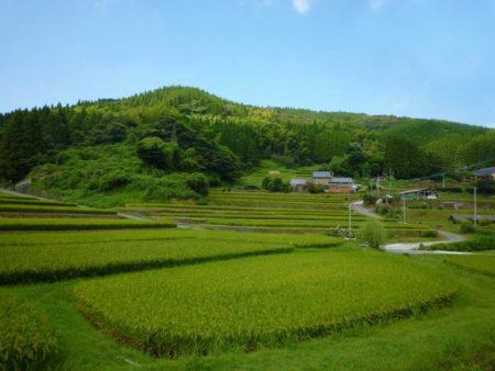 日吉町の草見の棚田に行ってきました。