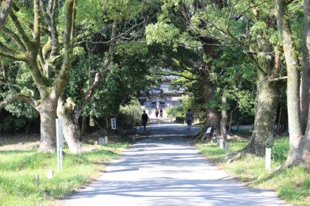大宰府政庁のすぐ近く。 クスノキの木立をくぐりぬけると、正面に、風格のあるお寺があらわれます。