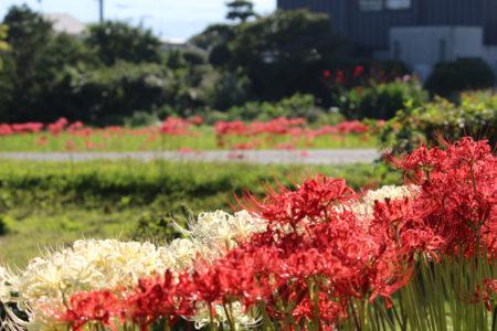 少し季節は前ですが、彼岸花の頃、太宰府周辺を散策しました。
