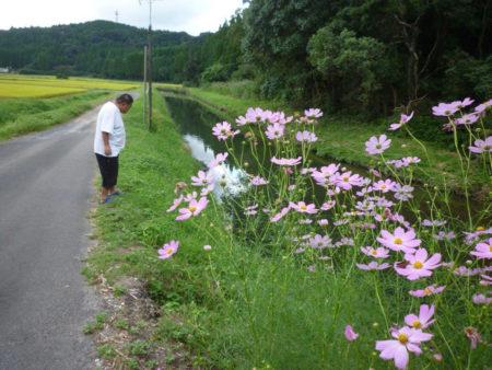 お客さんがいないとき、昭太さんは、近くの川で魚を見るのが楽しみです。