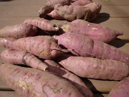 紅はるか、安納芋、紫芋…、品種も形もとりどりの自家製さつまいもを、ごろんごろんと盛大に