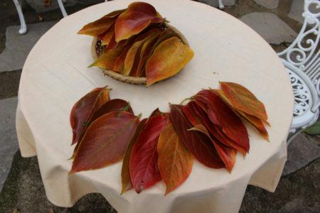 月照上人に届ける、思いがこもった柿の葉です。