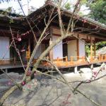梅ほころぶ旧島津氏玉里邸庭園 近くにお由羅屋敷跡も!