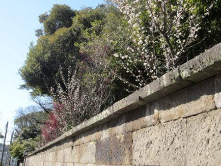 梅の花の甘い香りが…