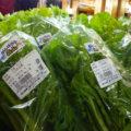 頑張ろう高山シールの野菜がいっぱい