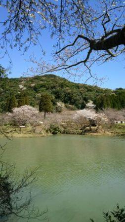 鹿児島の桜開花宣言