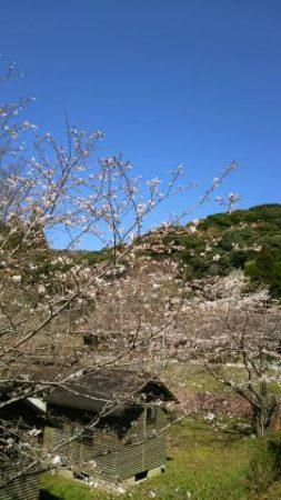 春の到来がことのほかありがたく感じられます