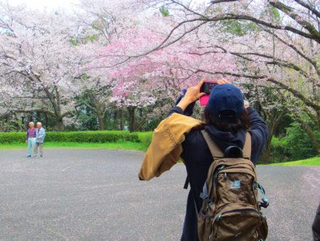 母智丘公園でも今度の土日、桜まつりの様々なイベントが開かれるそうですよ♪