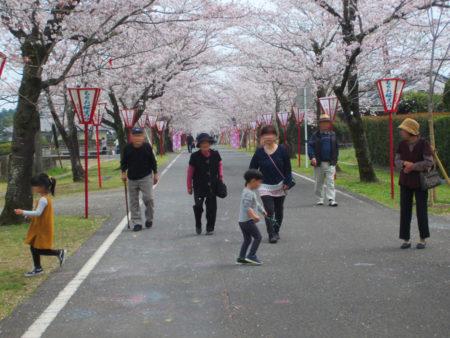 「日本のさくら名所100選」に選ばれた桜並木…