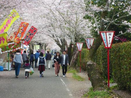 神社近くに駐車場がありますので、桜並木を楽しんだら、是非ここまで行ってみて下さいね。