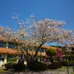 鹿児島の風景 2018年3月に閉校した8つの小学校の桜の花を訪ねて