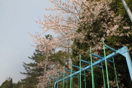 桜の下にはぶらんこ、のぼり棒。遊びながらお花見してたのかな。