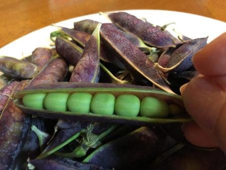 きちんとお行儀よく豆が並んでいて、その姿がなんとも可愛らしい