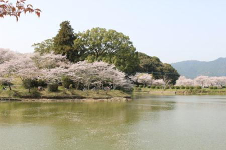 朝倉市 甘木公園・・福岡県屈指の桜の名所