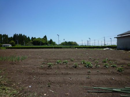 畑は手前のスペース