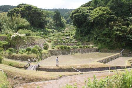 日吉町の草見の棚田