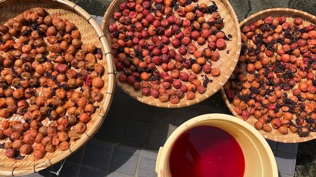 赤梅酢は、梅干しと同じように日光消毒します。
