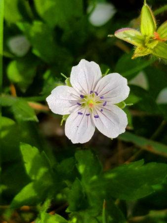 山頂のお花畑には春から秋にかけて色とりどりの花が咲き、花名山