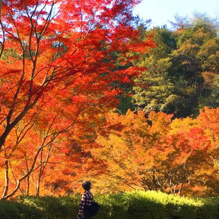 紅葉の見ごろでした!!福岡市の油山市民の森