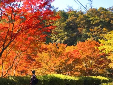 もみじ谷に着くと、山の木々が赤や黄色に色づいて、紅葉の見ごろを迎えていました。