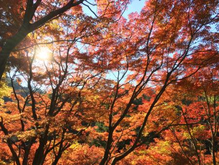 四季それぞれに姿を変える日本の風景。