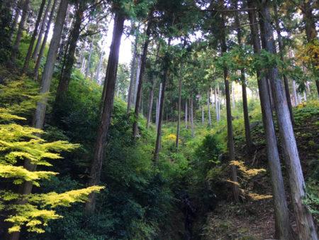 またこの時期、紅葉しない常緑樹の木々たちの、静かに凛と立つ姿もいいなあと思いました。