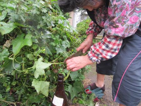 根元から50~60センチで茎をカット