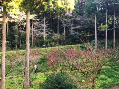 窓の向こうが薩摩紅梅の園