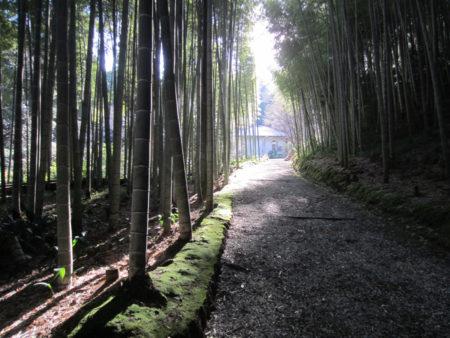 竹林の向こうの小さな森の美術館