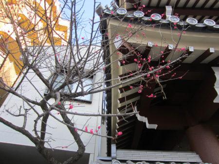門前に凛と咲く梅の花