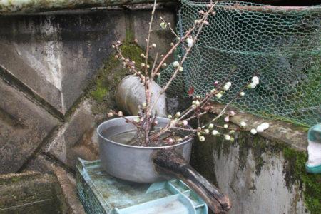 仏様にお供えする花でしょうか。お古のお鍋に活けられて出番を待っていました