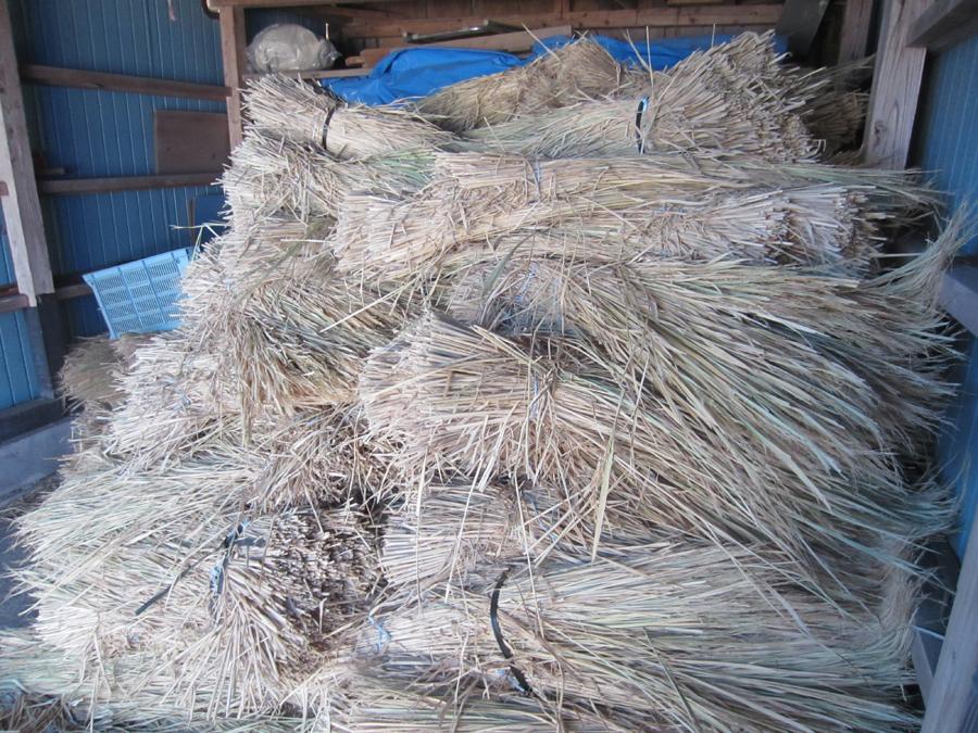 軽トラック2台分の稲藁でしめ縄を作ります