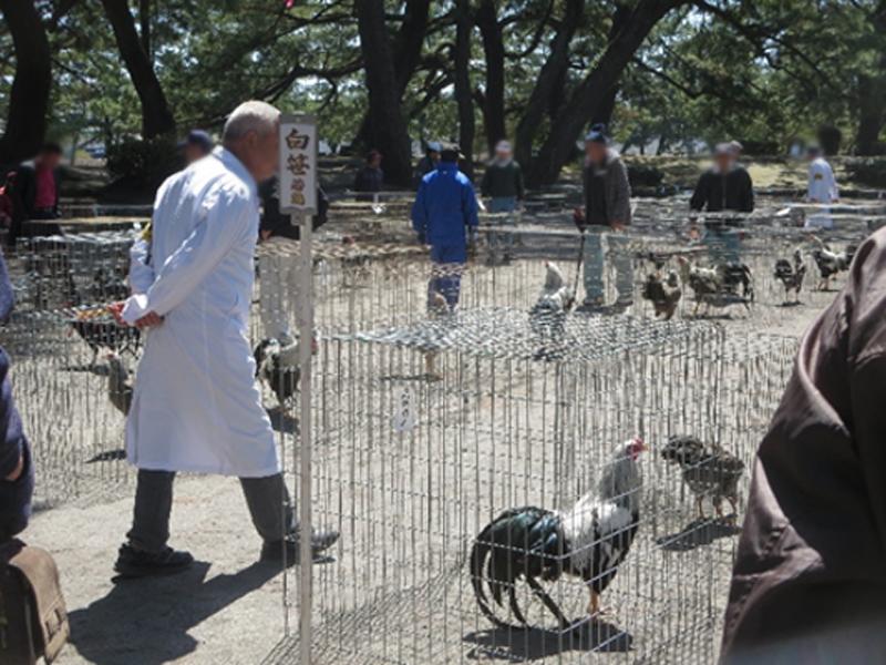 昨年の薩摩鶏品評会の様子