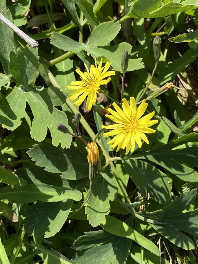 岩場にたくましく咲く草花