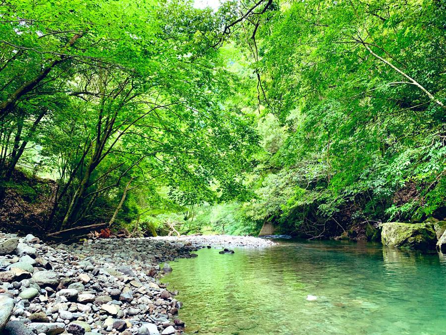 森の中には美しい川があり…(林さん撮影)