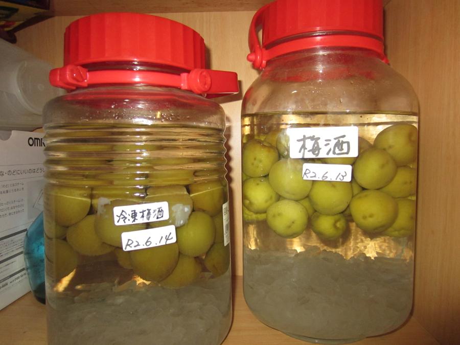 今年漬けた梅酒(左は冷凍梅で漬けた梅酒)