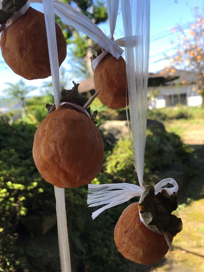 まずは、渋柿数個を干して、実験です!