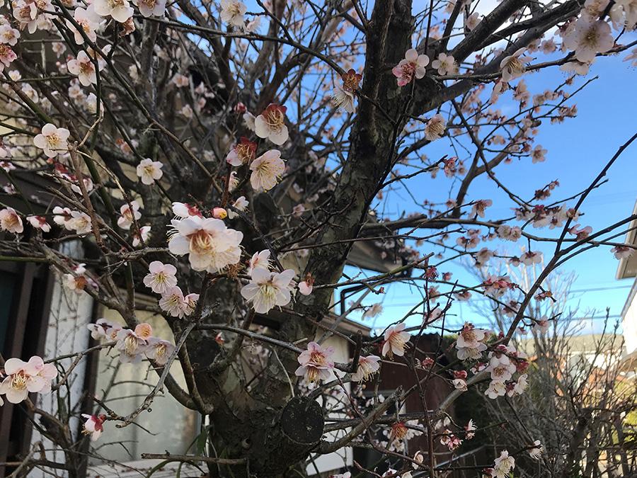 冬枯れの庭が華やぎ、窓から見える早春の景色を楽しみました。