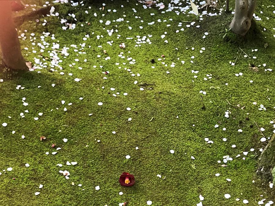 いつ、だれが来ても心地よく迎え入れる場所としてこの庭を大切にして、手入れを欠かさなかった松本憲融前住職。もうお会いすることはできません。