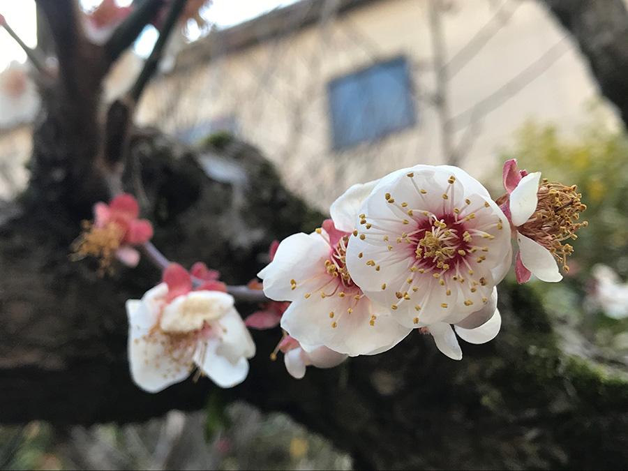 春を教えてくれる植物たちを見ていると、そのひたむきさが愛おしく感じられてきます。