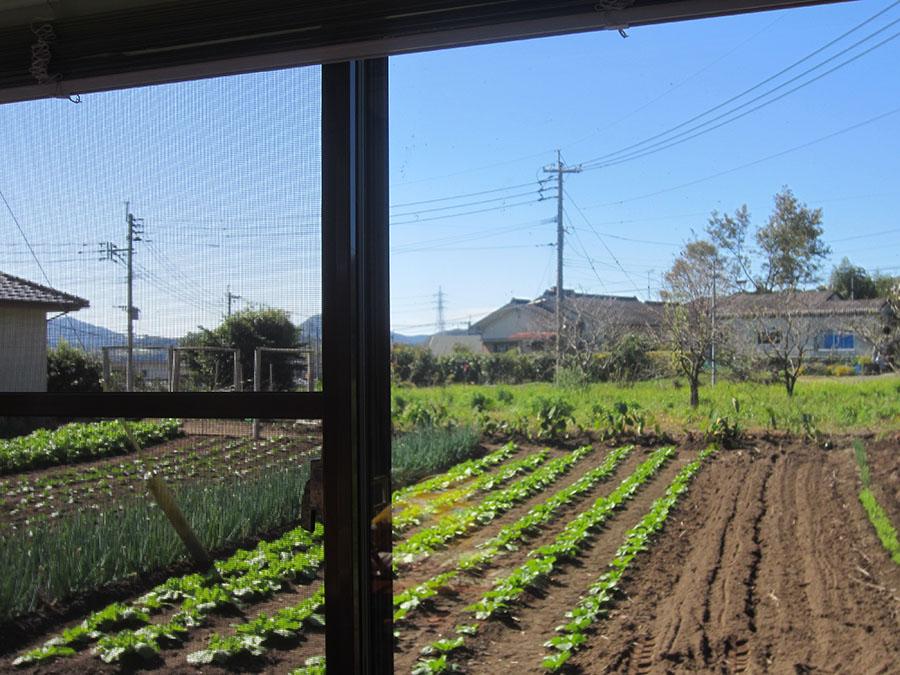 日当たりがよくて、窓の外には、地域の人たちの家庭菜園が広がっている長閑なところです。