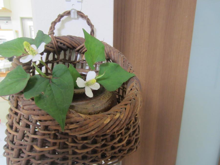 私は庭に咲いた花を1つふたつ摘んでは、一輪挿しに飾ったりしています。